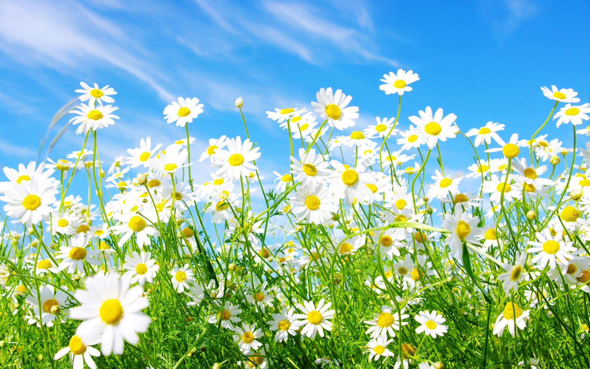 Kwiaty wiosna.